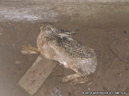 Ловушка для зайцев